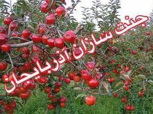 باغ سیب محصور هروی باسمنج حاج عبدال دیزج 739متر  در شیپور-عکس کوچک