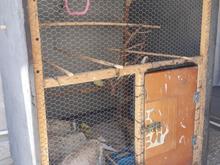 قفس چوبی محکم با کیفیت چوب لترون در شیپور-عکس کوچک