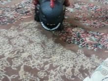 اژدها بی دندون در شیپور-عکس کوچک