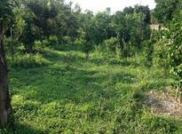 زمین 17000 متری باغ گیلاس ولنجک در شیپور-عکس کوچک