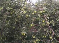 400متر باغ در دماوند در شیپور-عکس کوچک