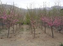 زمین باغ 510 متر دماوند ویو بینظیر  در شیپور-عکس کوچک