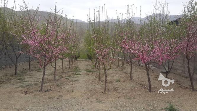 زمین باغ 510 متر دماوند ویو بینظیر  در گروه خرید و فروش املاک در تهران در شیپور-عکس1