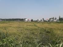 زمین اوجی اباد اسکی محله 600متری و به بالا شمال  در شیپور-عکس کوچک