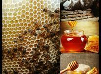 عسل طبیعی گون به شرط ازمایش  ساکاروز در شیپور-عکس کوچک