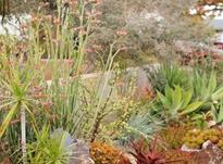 فضای سبز. مدیریت باغ در شیپور-عکس کوچک