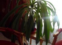 تعدادی گل طبیعی آپارتمانی و گلدان در شیپور-عکس کوچک