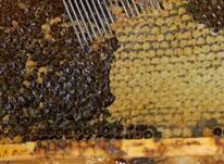 عسل کاملا طبیعی  در شیپور-عکس کوچک