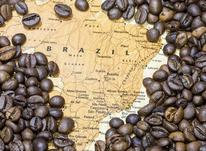 قیمت هر کیلو دون قهوه برزیل/ فروش عمده قهوه برزیل در شیپور-عکس کوچک