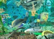 آکواریوم با شیشه 10 میل و میز و ماهی در شیپور-عکس کوچک