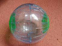 توپ حبابی حرکتی همستر در شیپور-عکس کوچک