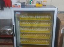 دستگاه جوجه کشی 420 تایی در شیپور-عکس کوچک