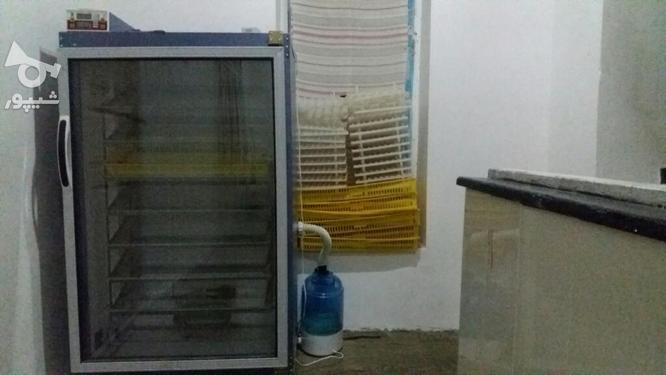 دستگاه جوجه کشی بلدرچین دماوند  در گروه خرید و فروش کسب و کار در گلستان در شیپور-عکس1