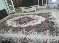 دو جفت  فرش  دوازده متری در شیپور-عکس کوچک