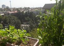 شهرک غرب 210متر 3خ برج مشاعات مشجر  در شیپور-عکس کوچک