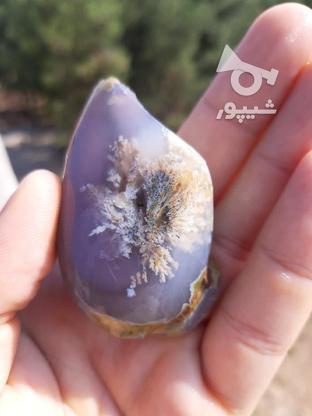 فروش شجر بهارری   در گروه خرید و فروش لوازم شخصی در زنجان در شیپور-عکس1