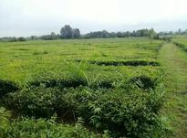 12هکتار زمین مسکونی باغی در نشتارود در شیپور-عکس کوچک