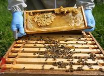 آموزش زنبورداری در شیپور-عکس کوچک