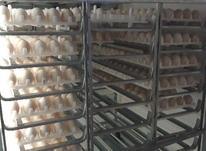 تخم نطفه دار بوقلمون در شیپور-عکس کوچک