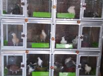 قفس 4 طبقه و 8 خونه در شیپور-عکس کوچک