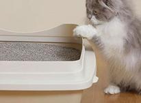 فروش خاک گربه/ در شیپور-عکس کوچک