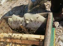 عسل طبیعی لاران علیا در شیپور-عکس کوچک