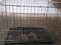 قفس سگ و گربه در شیپور-عکس کوچک