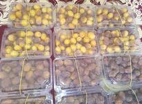 فروش قصب وخرما ورطب در شیپور-عکس کوچک