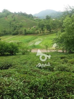 فروش زمین برجاده ویووعالی در گروه خرید و فروش املاک در گیلان در شیپور-عکس1