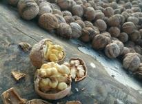 گردوی مرغوب در شیپور-عکس کوچک