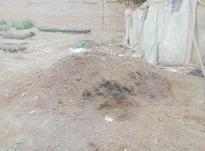 کود گوسفند خشک در شیپور-عکس کوچک