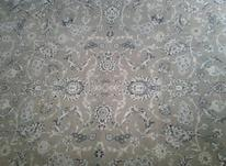 سه تخته فرش شش متری  در شیپور-عکس کوچک