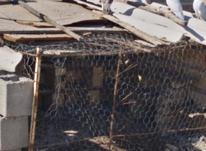 تعدادی کبوتر فروشی در شیپور-عکس کوچک