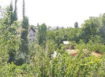 1250 متر باغ - دماوند در شیپور-عکس کوچک