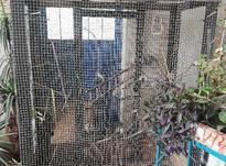 قفس پرنده خیلی شیک  در شیپور-عکس کوچک