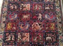قالیچه دستبافت در شیپور-عکس کوچک