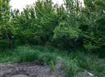 باغ 3000 متر در شهریار در شیپور-عکس کوچک