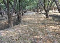فروش باغ 3000 متر در شهریار در شیپور-عکس کوچک