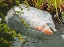 ماهی برای ارسال کوی اکسپرس بسته بندی در شیپور-عکس کوچک