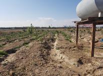 باغچه با 95 نهال انواع میوه  در شیپور-عکس کوچک