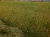 فروش زمین کشاورزی 3850 متر در بابل در شیپور-عکس کوچک