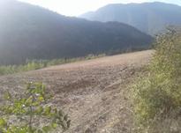 5800 متر زمین باغی رامیان در شیپور-عکس کوچک