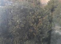 اداری 63 متر در پاسداران در شیپور-عکس کوچک