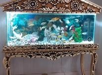 اکواریوم ماهی منبت کاری شده در شیپور-عکس کوچک