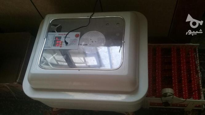 دستگاه جوجه کشی۹۶تای ایزی باتور 2 در گروه خرید و فروش کسب و کار در گلستان در شیپور-عکس1