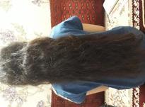 فروش موی طبیعی در شیپور-عکس کوچک