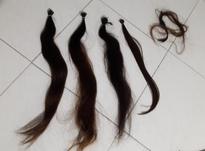 280 شاخه موی طبیعی به فروش می رسد در شیپور-عکس کوچک