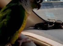 پرنده فروشی در شیپور-عکس کوچک