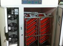 دستگاه جوجه کشی تمام صنعتی 1176 تایی در شیپور-عکس کوچک