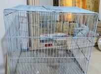 قفس پرنده. در شیپور-عکس کوچک